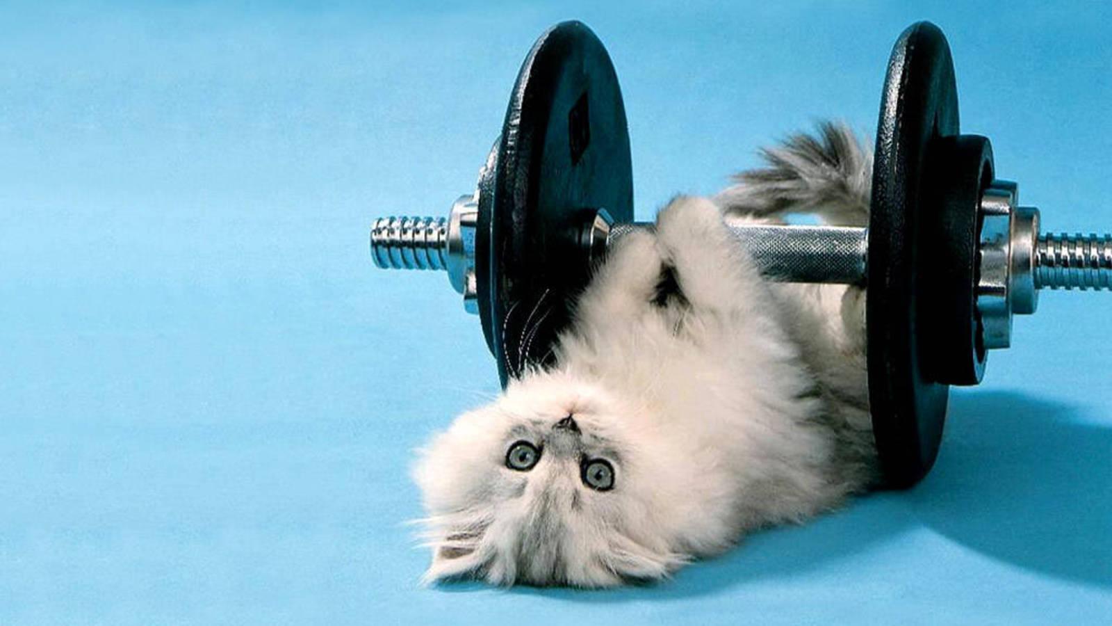 кот на интенсивной тренировке