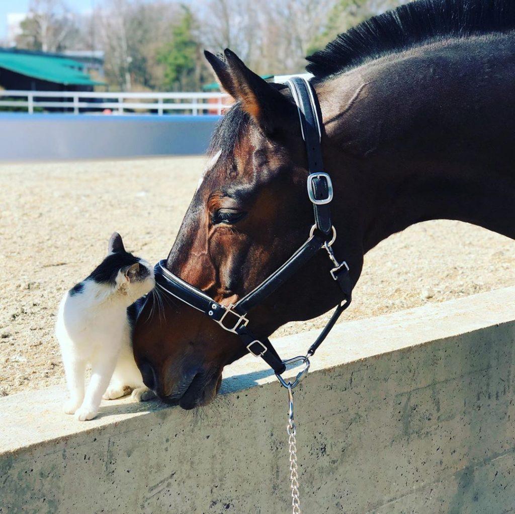 чему могут научить лошади в конном спорте
