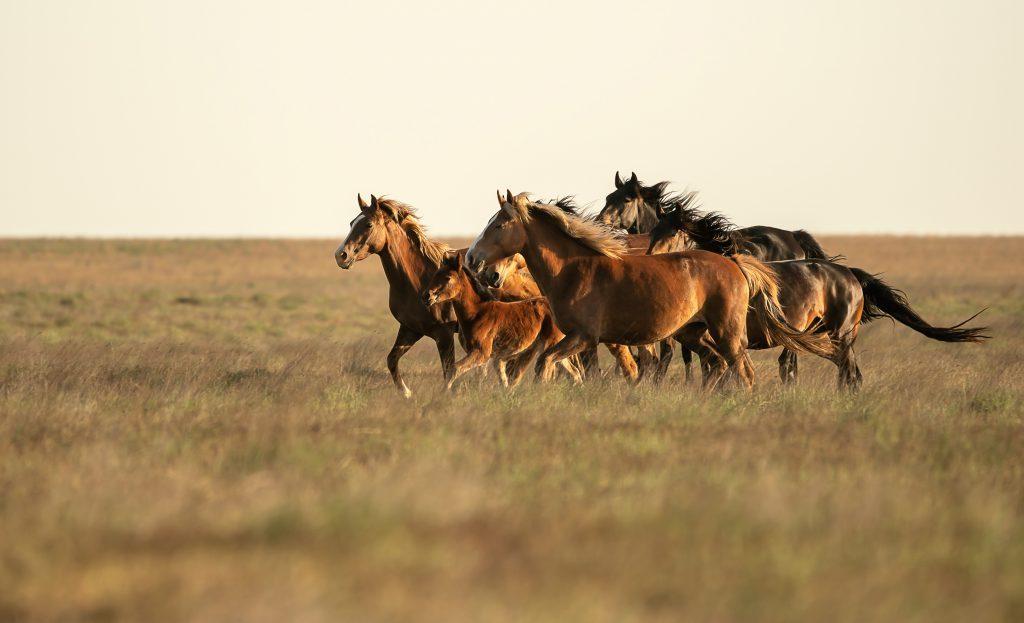 лошади научат ответственности - уроки в конном спорте
