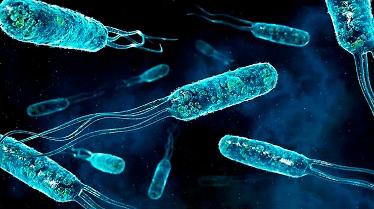 Можно ли заразиться в спортзале - статистика о микробах